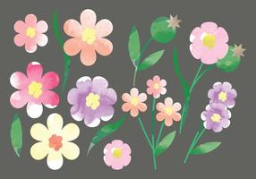 Fleurs aux aquarelles vectorielles