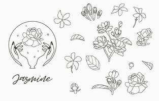 collection de jasmin avec des feuilles vecteur