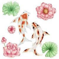 poisson koi aquarelle et fleur de lotus rose vecteur