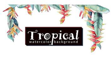 cadre avec peinture héliconia tropicale vecteur