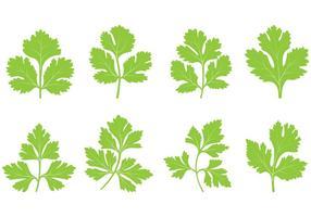 Ensemble de vecteur de feuille de cilantro