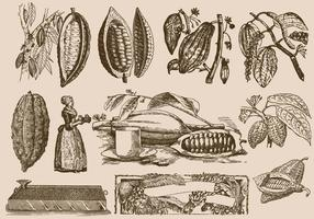 Haricots De Cacao Et Processus vecteur
