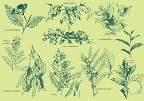 Plantes aromatiques vecteur