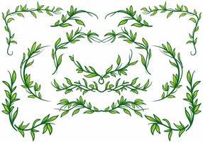 Vecteur libre de bordereau de plante de Liana