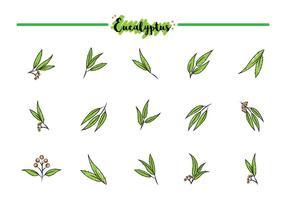 Icônes libres d'eucalyptus vecteur