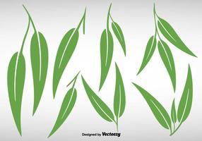 Collection de feuilles d'eucalyptus - vecteur