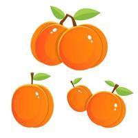 abricot frais isolé sur fond blanc vecteur