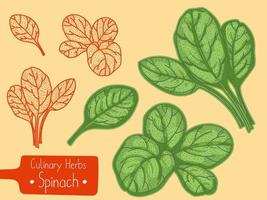 feuilles d'épinards