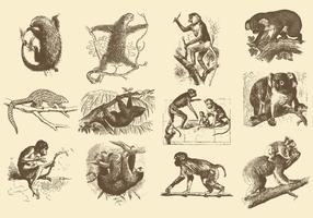 Illustrations Vintage des animaux vecteur