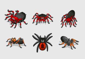 Pack de vecteur couleur couleur Tarantule
