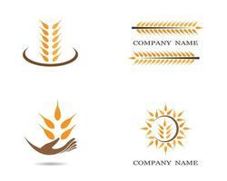 jeu d'icônes de logo de grain de blé vecteur