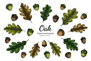 collection dessinée à la main de noix et de feuilles de chêne vecteur