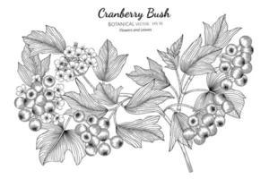 buisson de canneberges américain dessiné à la main vecteur