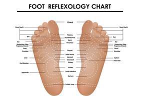 Tableau de réflexologie des pieds vecteur