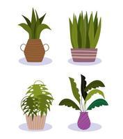 ensemble de plantes en pot