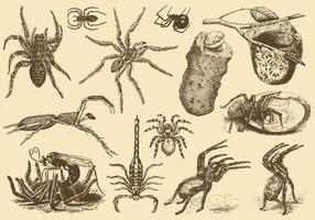 Arachnides toxiques vecteur