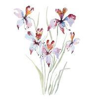 peinture d'orchidées à l'aquarelle vecteur