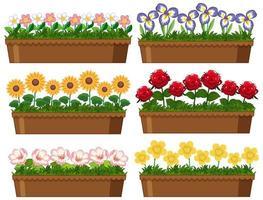 fleurs dans des pots en argile sur blanc vecteur