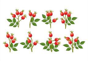 Icônes de Rose-Rose vecteur