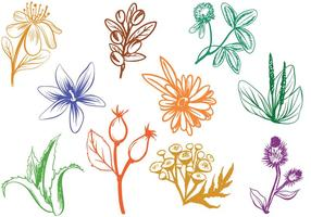 Vecteurs d'herbes cosmétiques gratuites vecteur