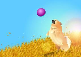 Pomeranian playing