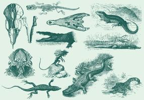 Illustrations de reptiles vintage vecteur