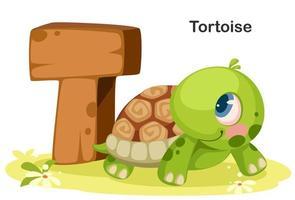 t pour tortue vecteur