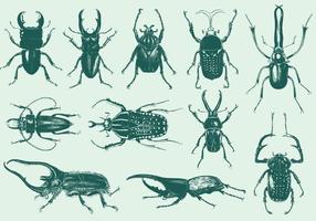 Bugs étranges vecteur