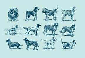 Illustration vintage de chien bleu