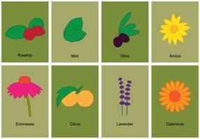 Ensemble de symboles Herb vecteur