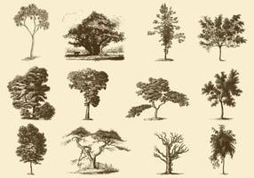 Illustrations des arbres sépia vecteur