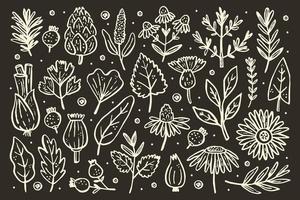 grand ensemble d'herbes. plantes forestières. fleur, branche, feuille, houblon, cône.