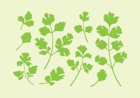 Vecteurs de persil ou de cilantro vecteur