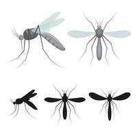 moustique insecte isolé vecteur
