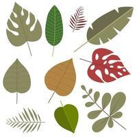 feuilles tropicales colorées