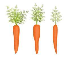 carotte fraîche isolée