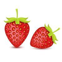 fraises fraîches isolées vecteur