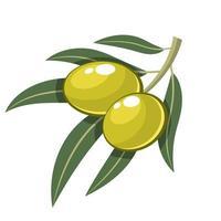 olive verte isolé sur fond blanc vecteur