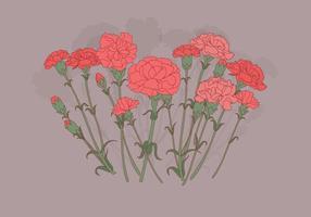Vecteur de fleurs d'oeillet