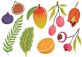 Des vecteurs exotiques de feuilles de fruits exotiques vecteur