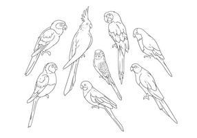 Dessin de main libre vecteur perroquets