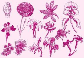 Illustrations exotiques roses de fleurs vecteur