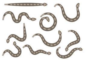 Vecteur de serpent à sonnette