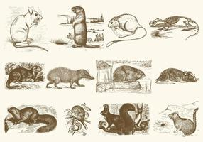 Illustrations de rongeurs sépia