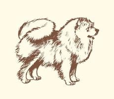 Illustration Pomeranienne gratuite de vecteur de chien