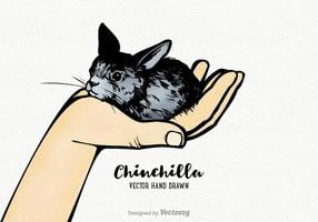 Chinchilla à dessins à main sans vecteur