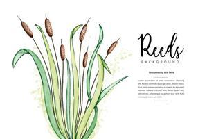 Fond libre de roseaux vecteur
