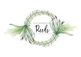 Fond de couronnes de roseaux libres vecteur