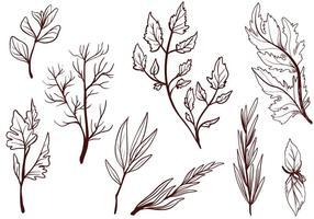 Vecteurs d'herbes de cuisine gratuites vecteur