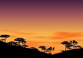 Silhouette de l'araucaria à l'après-midi avec le coucher du soleil Coucher de soleil vecteur